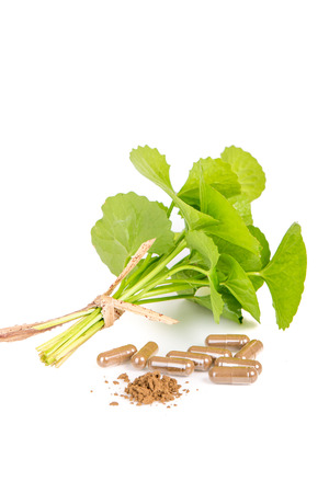 longevity drugs: Herbal medicine from Centella asiatica