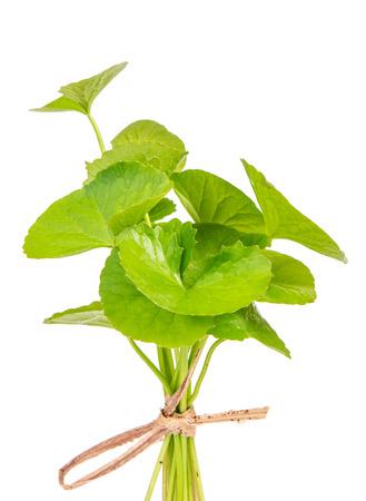 asiatica: Herbal Thankuni leaves of indian subcontinent, Centella asiatica
