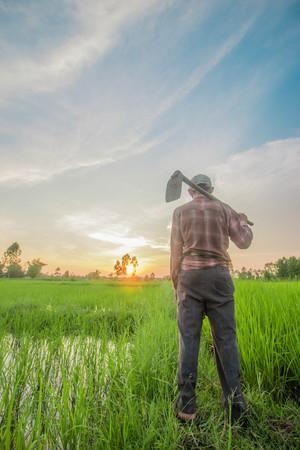 back hoe: Thai farmer carrying hoe