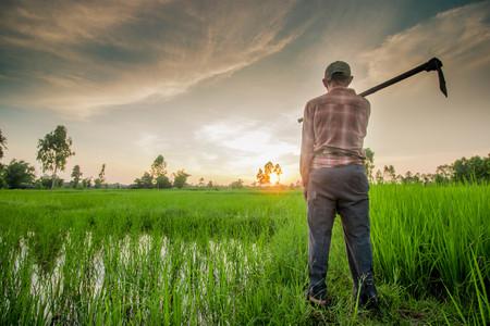 Thaise boer dragen schoffel Stockfoto - 45841772