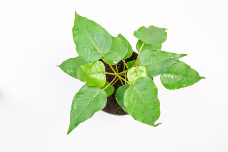 to plant: green plant  in a pot above view Stock Photo