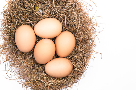 eggs in a nest isolated on a white background