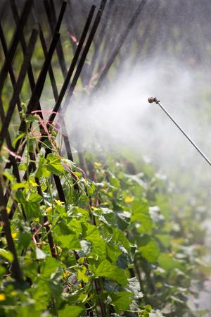 pesticide: spraying pesticide