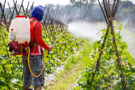 contaminacion ambiental: pulverización de pesticidas Foto de archivo