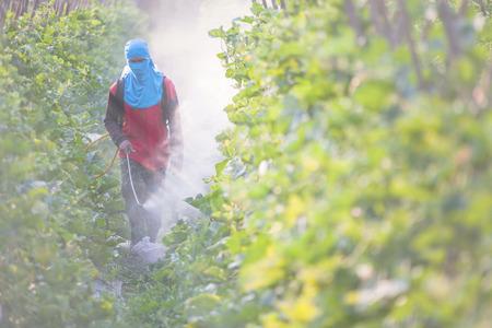 Spuiten van pesticiden Stockfoto - 48883234