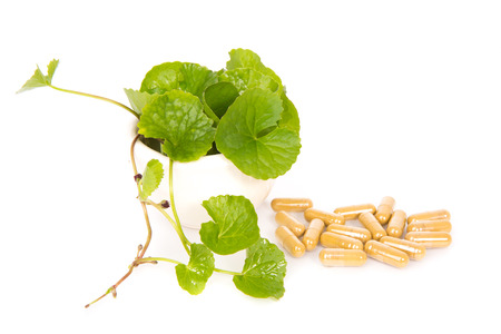 longevity medicine: Herbal Thankuni leaves of indian subcontinent, Centella asiatica,gotu kola on white background,