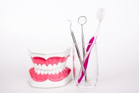 tooth model with  toothbrush on white background