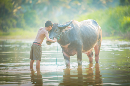 happy families: asian boy and his buffalo