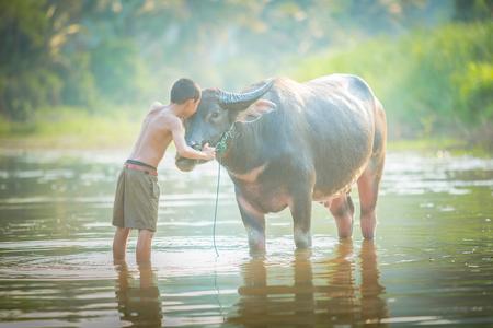 familias felices: El muchacho asiático y su búfalo Foto de archivo