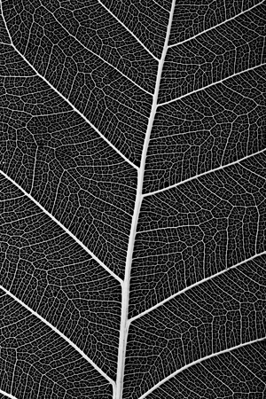 delicate: macro of a delicate leaf cell structure