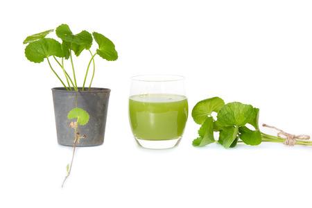 laxative: Gotu kolas leafs drink ,gotu kola in black pot on white background