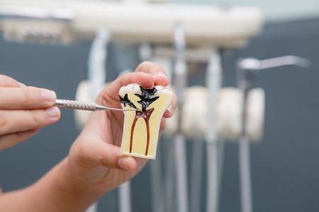 Dental Teeth Model and dental tool