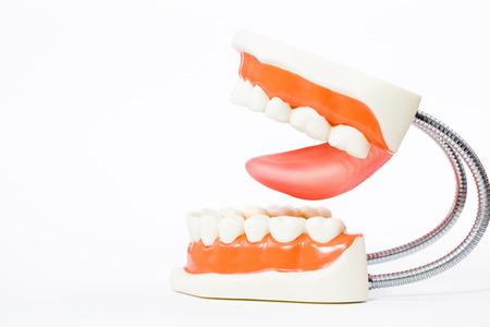 dental model,teeth model,dental tool on white background