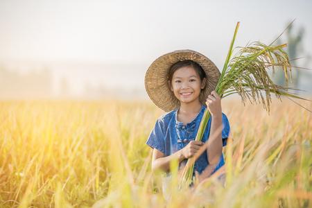 아침에 노란색 쌀 필드에 아시아 어린이 농부 스톡 콘텐츠