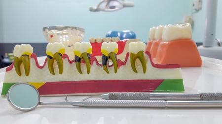 Dental Teeth Model and dental tool in dental office