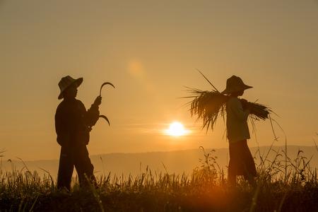 日の出背景を持つ分野で穀物の収穫を子供のシルエット