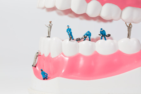People to clean tooth model Standard-Bild