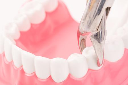 dental model and dental tool
