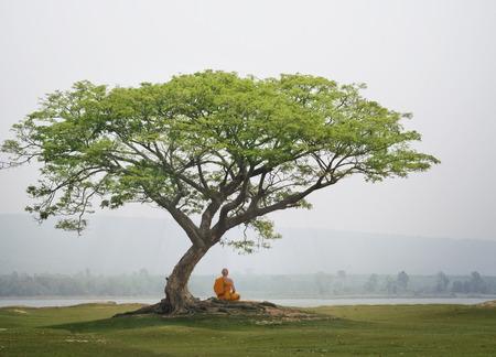 Buda monje practica la meditación bajo el árbol.
