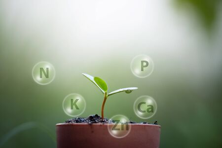 Seedlings  growth from soils and digital mineral icon Stockfoto - 126578284
