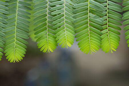 Fresh green leaves pattern background