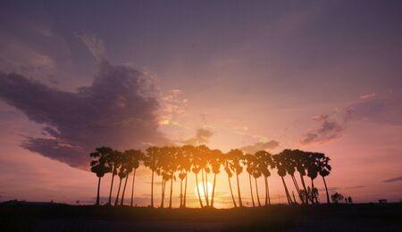 Palm tree with beautiful sunset or sunrise background