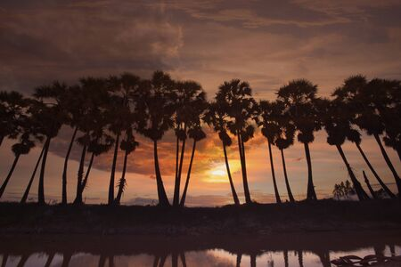 Palm tree with beautiful sunset or sunrise background Stockfoto - 126578307