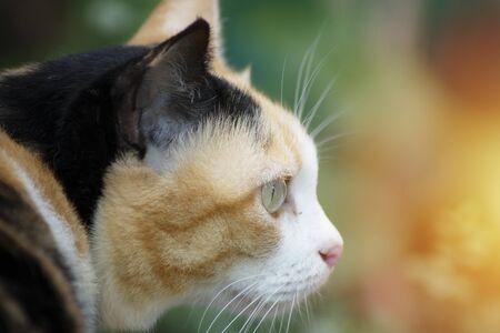 Close up head of cat Stockfoto