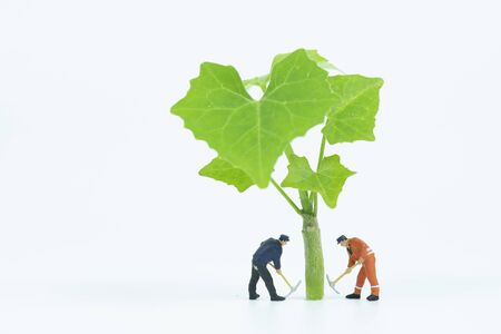 miniature people working with tree on white background