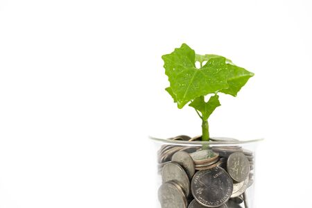 Little plant growing from coins on white background Stockfoto