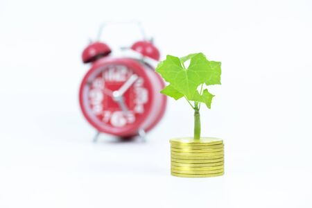 Tree growth on gold coin with alarm clock on white background Stockfoto