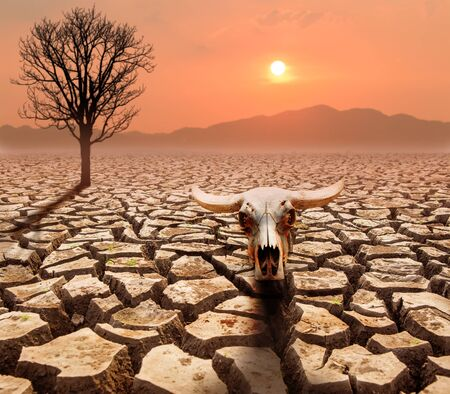 crack ground with dead tree and buffelo head ,global warming  concept Stock Photo