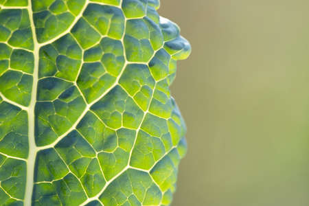 Close up green leaf texture for background with copy space