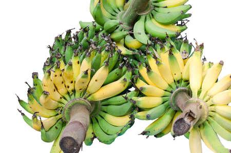 close up on banana fruit photo