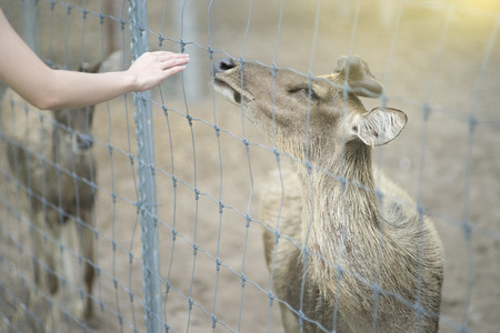 reach out: hand of woman reach out for touch a deer, bekind a deer, sunlight effect on the right side top corner