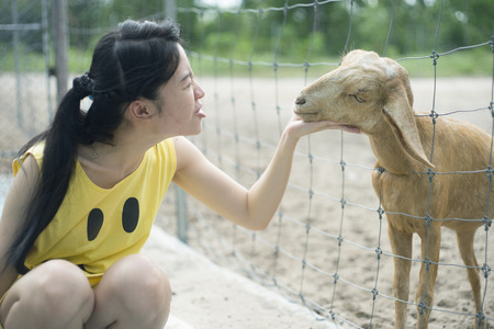 to tease: woman tease a goat in paddock, play with a goat Stock Photo