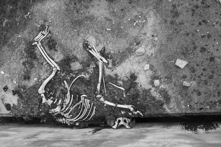 evolutionary: Carrion dead dry.The skeleton bone of dog
