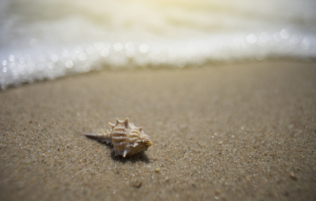 sea shell on a sand beach with blurred sea background.selective focus.light effect added