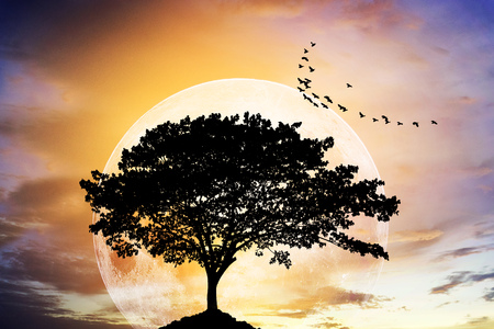 Silhouettes of lone big tree beautiful branch against dawn or evening sky with moon at it largest also called supermoon. alone feeling. dream concept. Elements of this image furnished by NASA