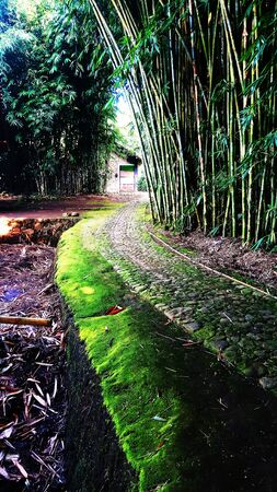 stone path under a bamboo tree