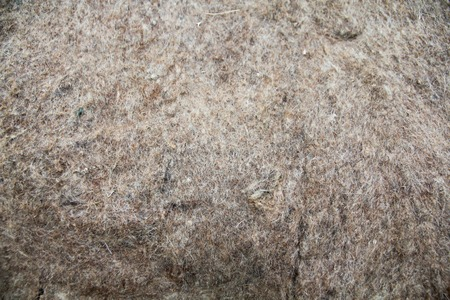 wooly: Texture of wooly felt material background for your project