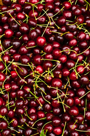 Close up on ripe red cherries. Cherry background.