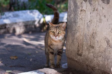 grey cat: Grey sad cat on the street
