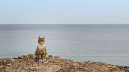 Sad homeless cat sitting on the beach. The image is tinted and selective focus. Stock Photo