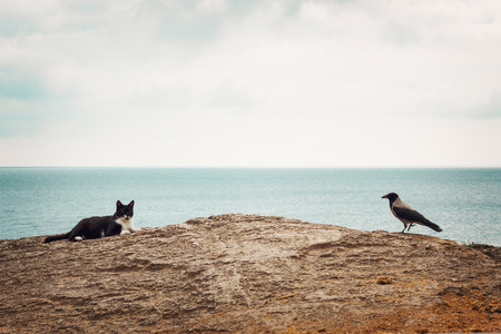 selective focus: The crow and the cat on the beach. Selective focus.
