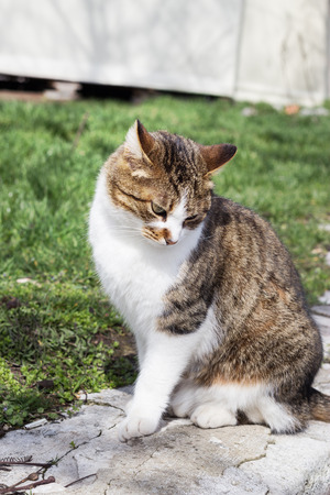 vagrant: The cat is shy Stock Photo