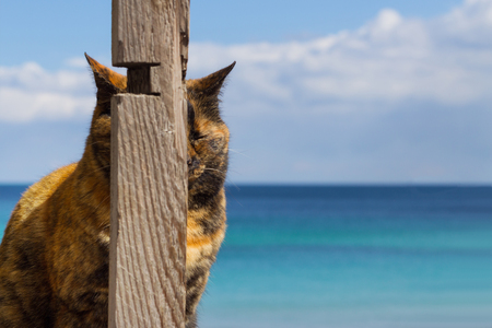 Funny cat on the background of the sea, hid behind a wooden pillar. Selective focus.