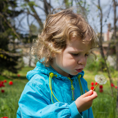 girl blowing: Beautiful little girl blowing dandelion. Selective focus.