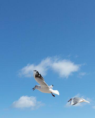 Beautiful sea gulls on a background of blue sky. Selective focus. Reklamní fotografie