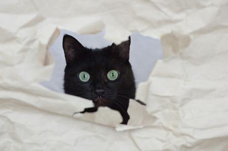A black cat peeks through a hole in a paper